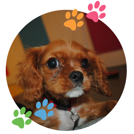 puppy-image01